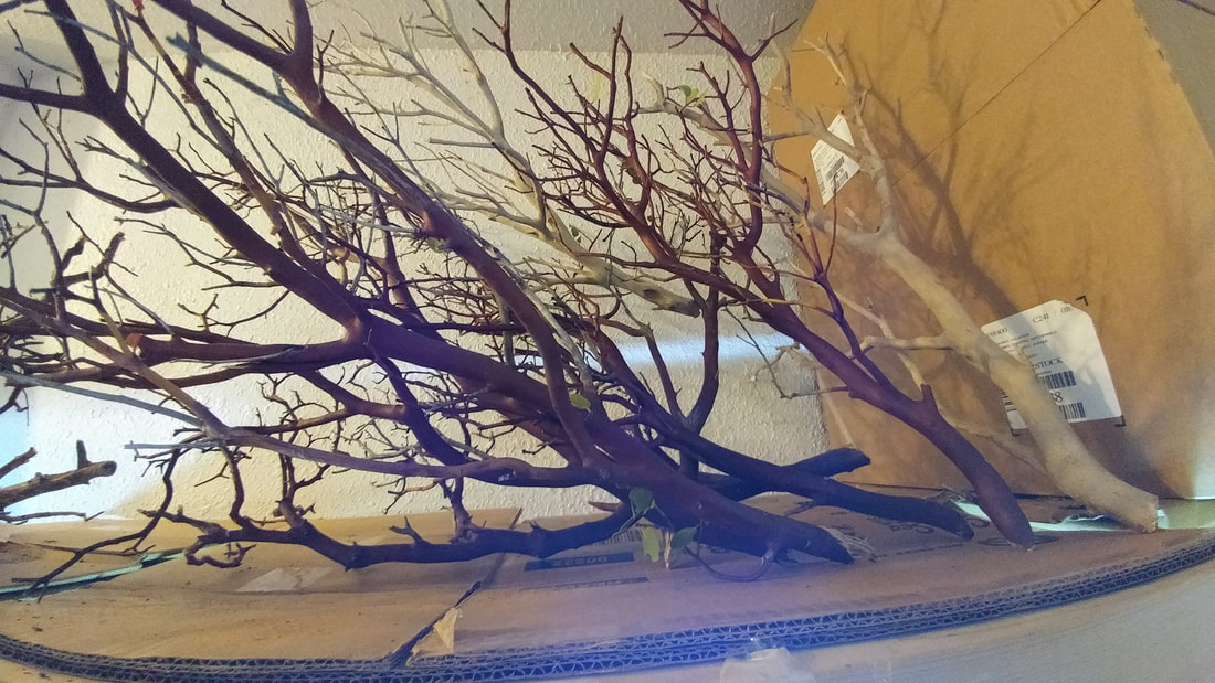Manzanita driftwood for sale at Milwaukee Aquatics, Manzanita driftwood, manzanita driftwood Milwaukee