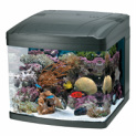 BioCube, BioCube Milwaukee, BioCube Milwaukee Aquatics, Supplies Milwaukee, Supplies Milwaukee Aquatics, Fish Supplies Milwaukee